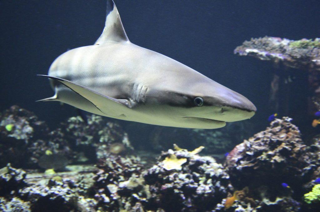 kostiumy Fastskin wzorowano na skórze rekina