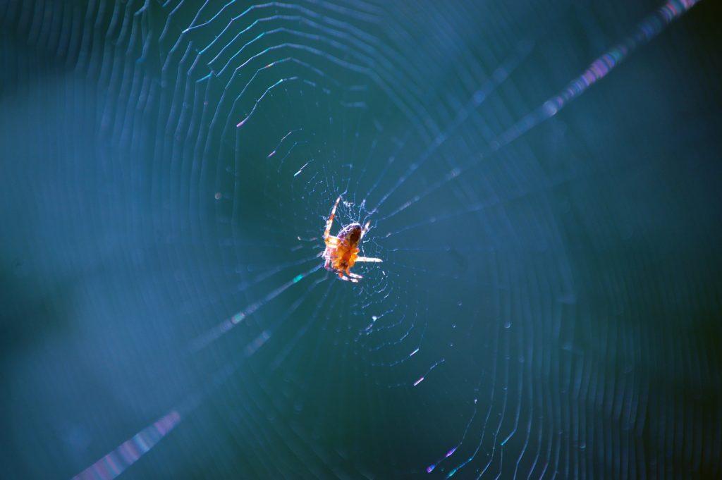Nexiai US Army stworzyły nić zainspirowaną siecią pająka